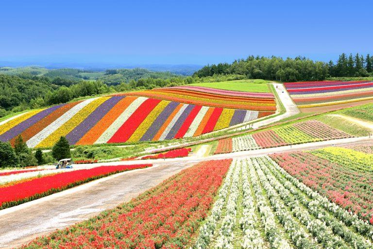美瑛色彩の丘1000pix